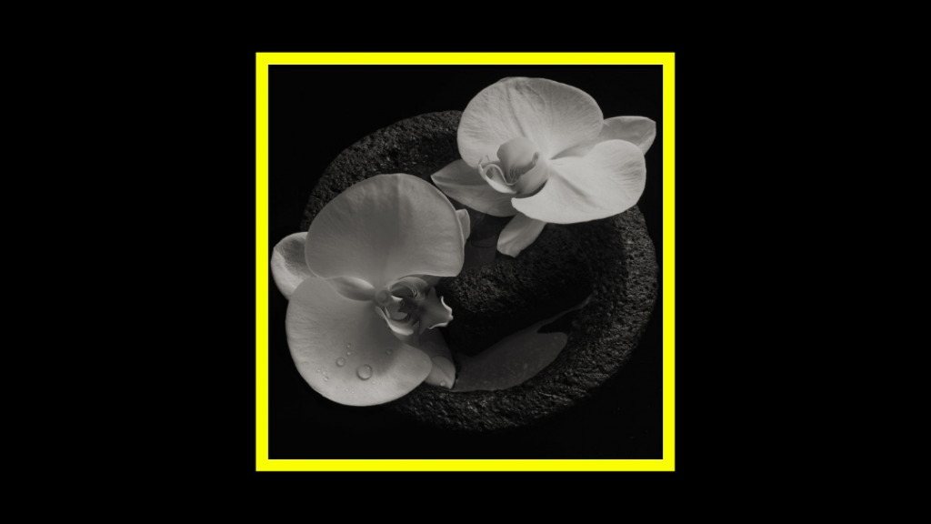 Mike Patton & Jean-Claude Vannier - Corpse Flower Radioaktiv
